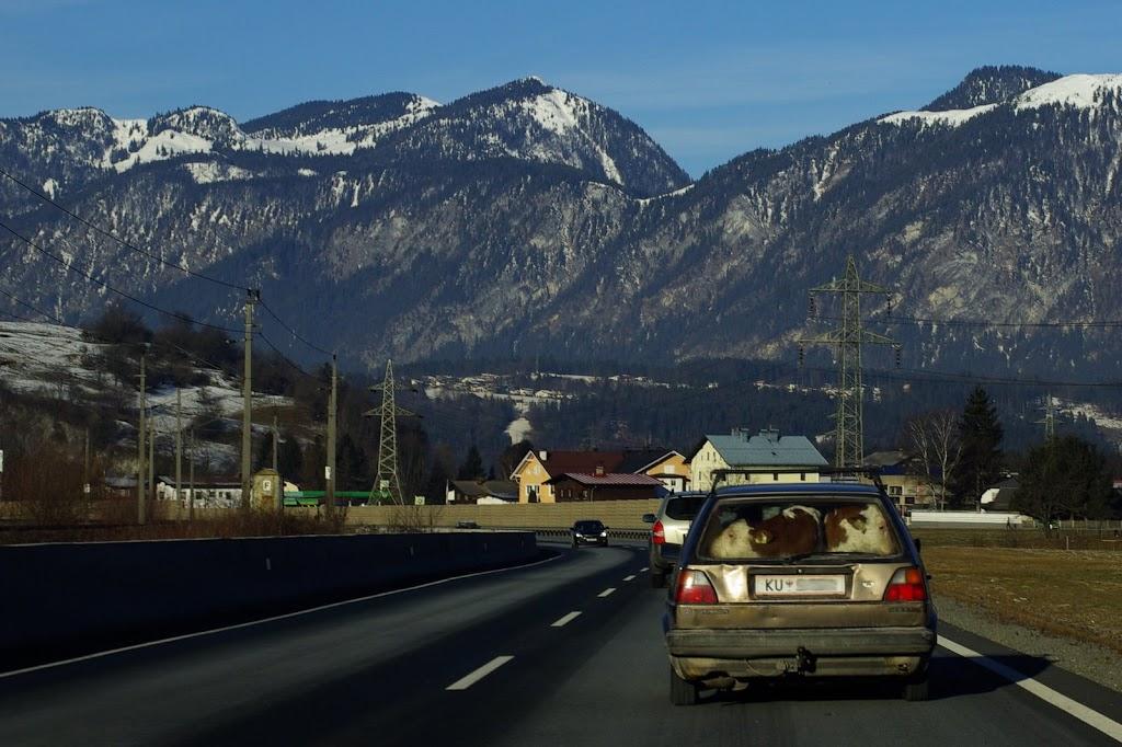 Tiertransport im VW Golf?